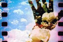 Polaroid/Lomography