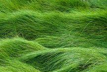Colour ○ Green