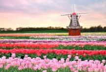 Netherlands Tulip Tour / 荷蘭的鬱金香,花開成海。 / http://www.europaholidayus.com/2013/10/netherlands-8-day-tour-of-tulip/