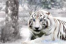 Animals :>