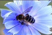 Pszczoły / Na całym świecie pszczoły masowo giną w wyniku nadmiernego  wykorzystania pestycydów w rolnictwie i jego uprzemysłowienia, chorób i zmian klimatu. Wspólnie możemy im pomóc!