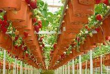 Вертикальные сады / Необычные решения для дачи/сада, вертикальное озеленение