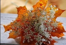 Fall Is In The Air... / by Poppy