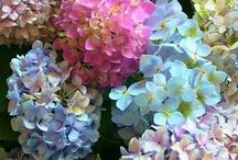 Flowers, makes me happy / I want them all, wish I had a green thumb. Flowers just make me happy.. / by Brenda Williams