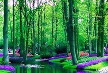 çiçekler / çiçeklerin güzelliği ve yaşamdaki önemi