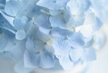 Dreaming in Blue   ~ ✿ ~ / The color blue is the color of trust and responsibility.  It is sincere, reserved and quiet...