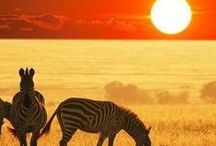 The essence of Africa ✿⊱╮ / You can never hope to describe the emotion Africa creates. You are lifted. Out of whatever pit, unbound from whatever tie... You are lifted and you see it all from above. ~Francesca Marciano