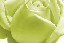 Peridot Green ✿⊱╮Fashion / Thank you for following me! Have originality, so try to pin with respect!