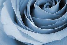 Dusk Blue ✿⊱╮Fashion
