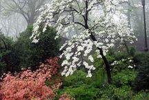 Our Secret Garden / Nuestro Escondrijo