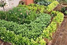 Vegetable Gardens / The right vegetable garden can improve any diet! Growing your own food can improve any families lifestyle, at least thats what we believe here at GreenWay Blooming Centre.