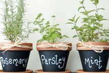 Herbs / Herbs are great for so many reasons.  They Smell great, look great, you can add them to most recipes and even make tea out of some. Enjoy GreenWay's favourite herbs.
