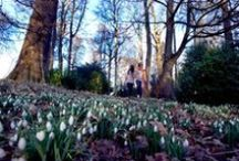 Celebration of Snowdrops / 3rd February  – 12th March Enjoy a Celebration of Snowdrops within the Grounds of Scone Palace  each Friday, Saturday and Sunday  FREE ENTRY & PARKING Coffee Shop and Food Shop Open www.scone-palace.co.uk