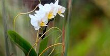 Orchideák és gondozásuk