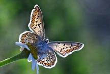 Ladybirds & Butterflies