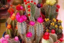 Indoor Plants / by Sheila Stump