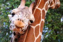 Amazing Animals / Interesting animals doing amazing things.