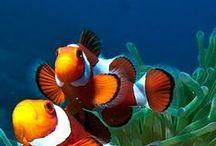 Fish / Nature / by parekhworld