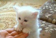 kittens/kattunger