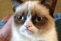 Grumpy Cat / I love it <3