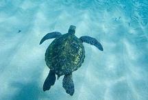 marine life / by Linda Bell