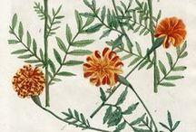 Ботанические илюстрации