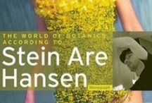 Stein Are Hansen