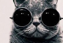 Glasses / I need see u...