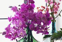 Pantone-Radiant Orchid 2014
