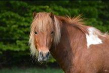 Heste på Vengedalen / Vores dejlige heste på Vengedalen