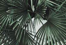 Palms // Leaves