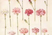• botanical art •