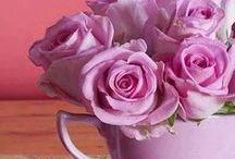 Rose, Roses / Rózsa Rózsák / Csodás  rózsák / Wonderful roses