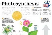 Science: Life - botany