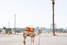 • marrakech & essaouira •