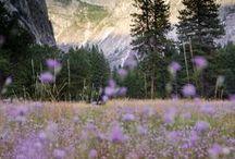 Yosemite // Travel Guide / Yosemite Park USA  Nordamerika Reisen Travel Wandern