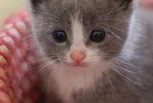 CHATS trop mignons / CUTE CATS