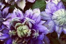 lovemylittlehouse - FLOWERS