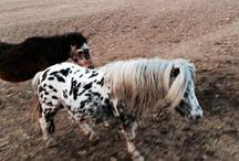 lovemylittlehouse - HORSES