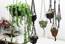 Blomsterpotter/Planters