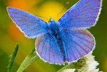 Perhosia ja muita mukavia hyönteisiä / kuvia perhosista ja muista hyödyllisistä tai muuten mukavista hyönteisistä sekä niiden hyvinvointia varten tarpeellisista asioista