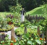 Puutarha : hyötyviljely