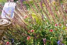 """jardin / jardins de plantes vivace à visiter avec vente directe et production locale à vichy en auvergne nouvelle pépinière avec une plus grande diversité de choix de plantes vivaces """"Les Jardins des Hurlevents """" http://www.plantes-vivaces-hurlevents.com/"""