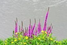 Plantas y flores  by PVillegas / Las flores y plantas que me voy encontrando en viajes, paseos y algunas del patio de mi casa