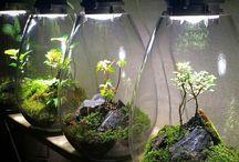 Micro terrariums / Home live decorations