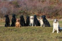 I Nostri Cani!!