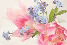Flowers / #Spring, #Summer, #Flowers, #Romantic, #Beautiful.