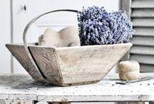 Lavender ♥ / #Lavender