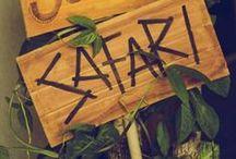 Safari 1st Birthday