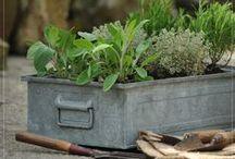 Kruidentuin - Herbs